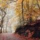 Den smukke Bøgeskov